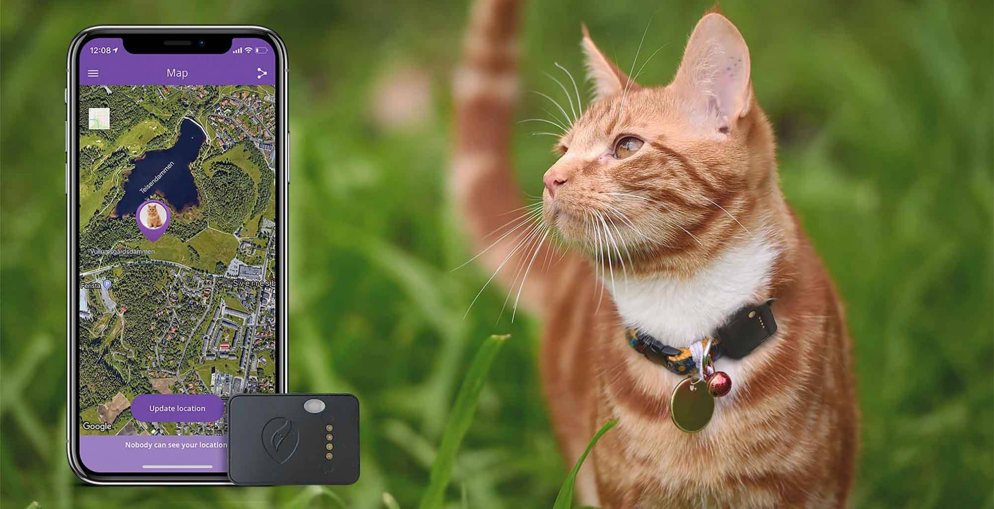 Cat-tracker on a cat with APP
